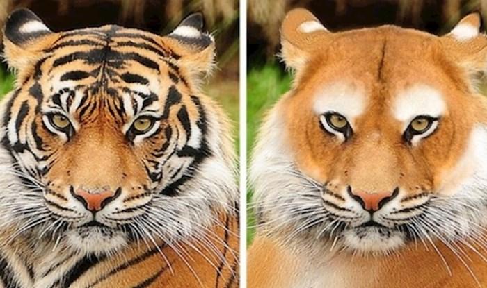 Ako ste se ikad zapitali kako bi životinje izgledale bez svojih prepoznatljivih šara, evo odgovora