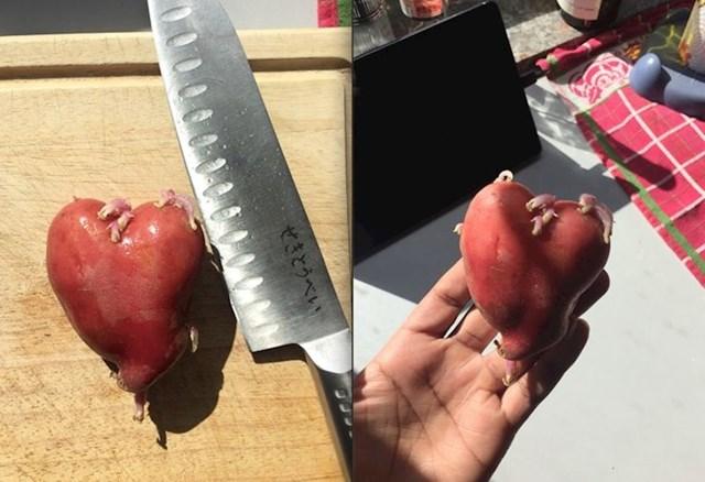 Krumpir u obliku srca s arterijama