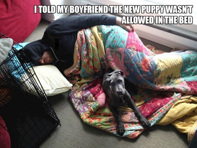 9. Rekla sam dečku da naš psić ne smije na krevet...