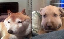 Urnebesne fotke pasa koji su pojeli pčelu i gadno požalili