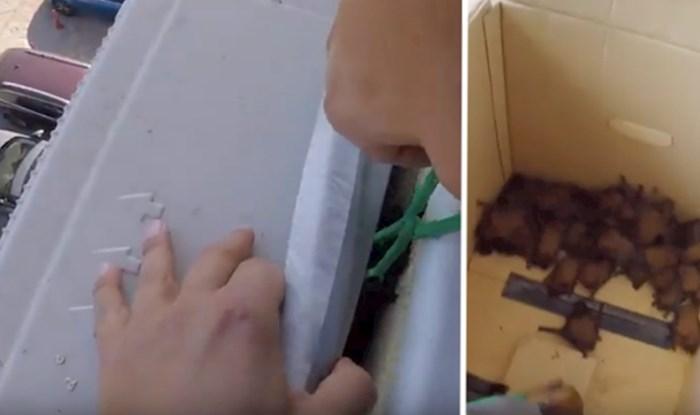 VIDEO Ovi ljudi spasili su koloniju šišmiša i odveli ih natrag u šumu