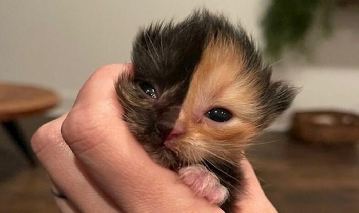 Upoznajte jednog posebnog neodoljivog mačića s dva lica