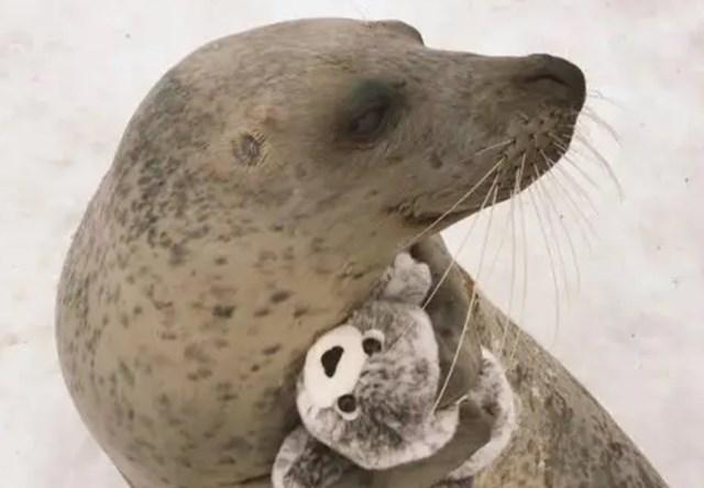 Tuljan i njegov plišani prijatelj. :)