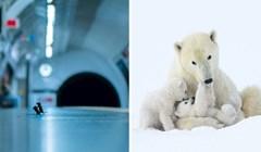 25 finalista za najbolju fotografiju divljih životinja 2019. godine