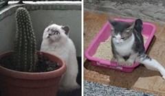 """27 mačaka koje su se ponašale čudno pa su se vlasnici zapitali: """"Što nije u redu s mojom mačkom?"""""""