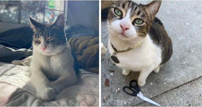 Upoznajte mačku koja krade stvari susjedima i donosi 'poklone' svojim vlasnicima