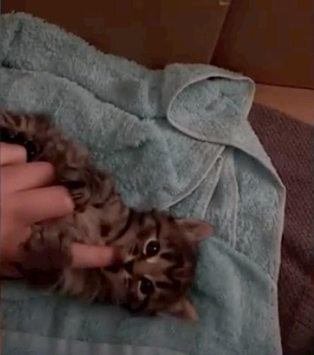 #11 Mačić koji na glavi ima M slovo.