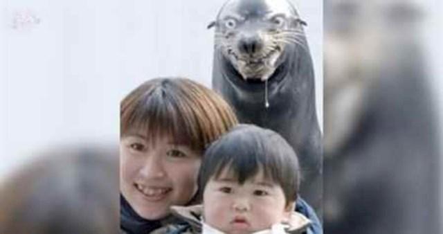 Ovaj bijesni tuljan pomalo je zastrašujuć i pravo je čudo kako ovaj dječak još uvijek nije krenuo plakat.