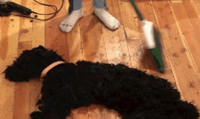 Možda ćete se zbuniti kad vidite što je učinila psu, a možda i odmah skužite foru