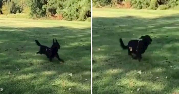 Vlasnik je snimao svog psa, a onda se dogodilo nešto potpuno neočekivano