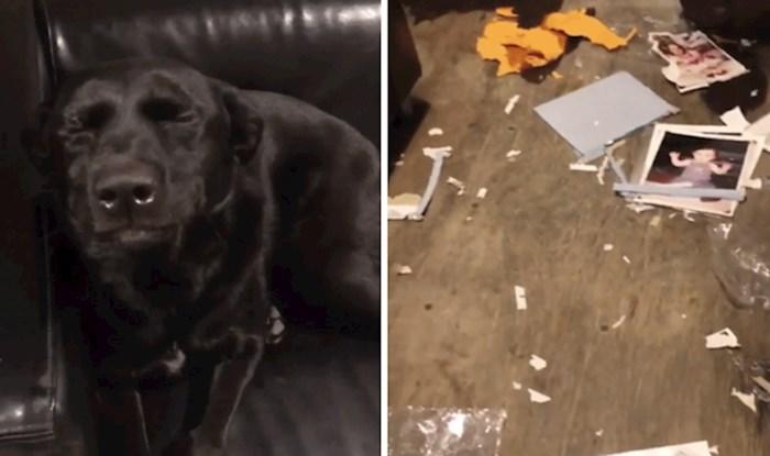 Ovaj pas odlučio je zatvoriti oči i tako pobjeći od nereda koji je napravio