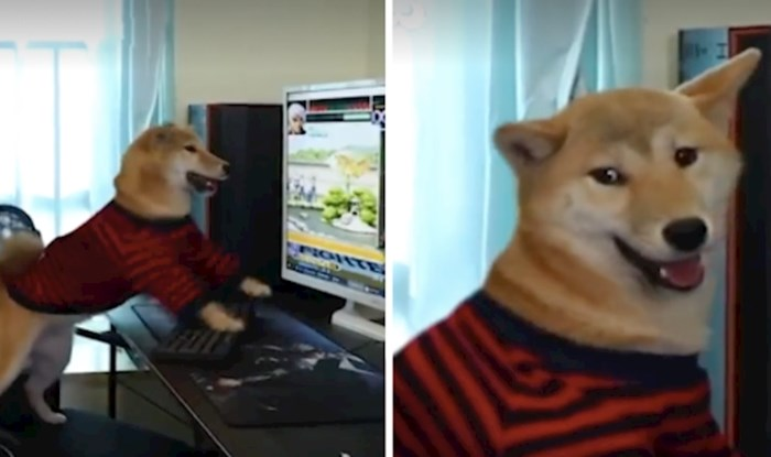 VIDEO Morate vidjeti njegovu reakciju kad mu vlasnik isključi igricu