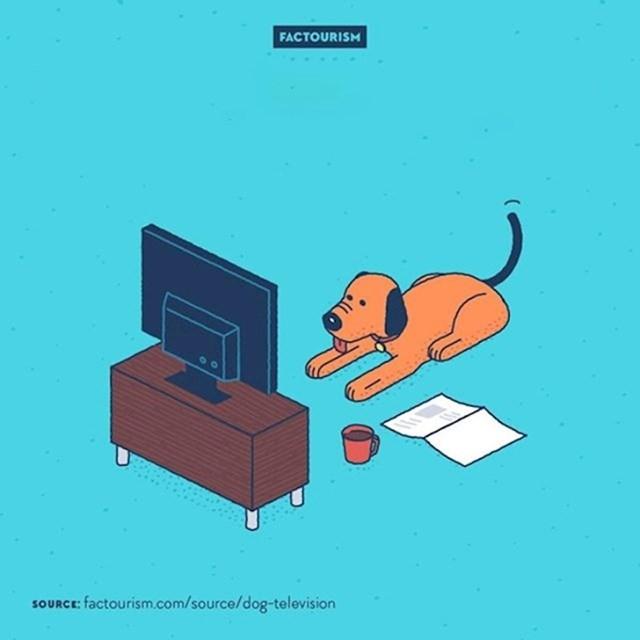 #9 Zahvaljujući ravnim ekranima i visokoj rezoluciji, psi mogu gledati TV baš kao i ljudi.