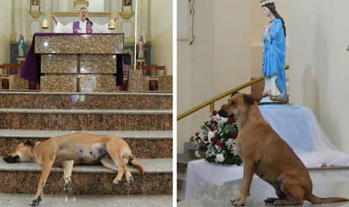 Ljubazni svećenik dovodi pse lutalice na misu kako bi mogli pronaći nove obitelji