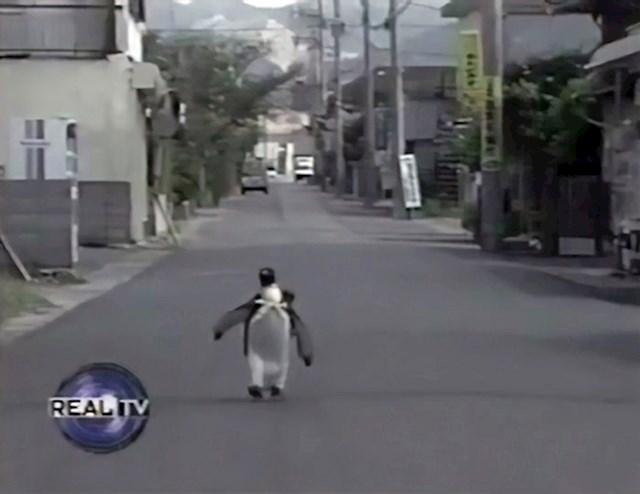 Upoznajte Lalu, simpatičnog pingvina koji godinama živi s japanskom obitelji.