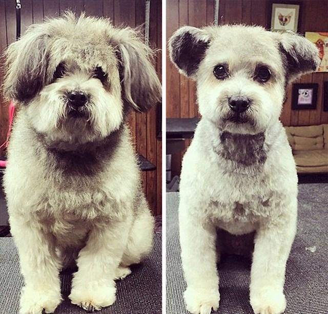 #11 Moj pas nakon odlaska kod frizera
