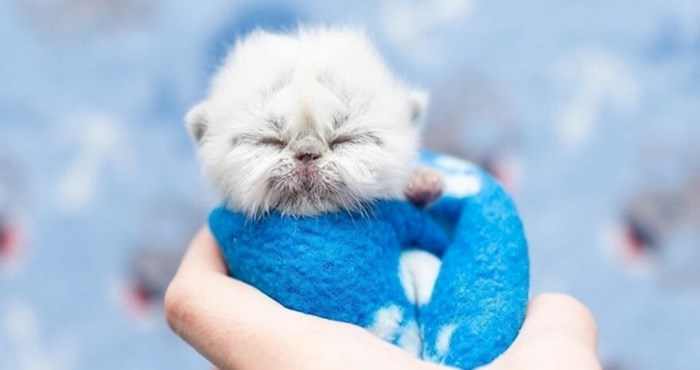 """Upoznajte """"Djeda"""", preslatkog mačića koji je oduševio internet svojim neobičnim izgledom i šarmom"""
