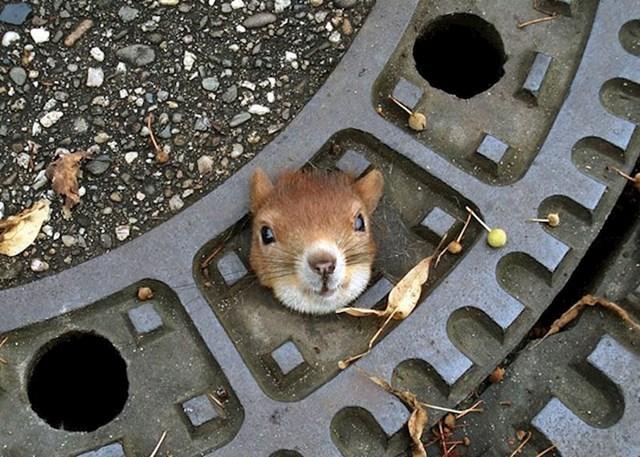 #13 Zbog klimatskih promjena i urbanizacije većina vjeverica sada živi u podzemlju
