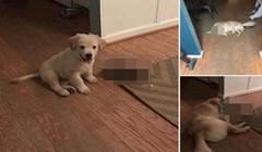 Ovaj pas cijeli život ne odvaja se od vrlo neobičnog prijatelja