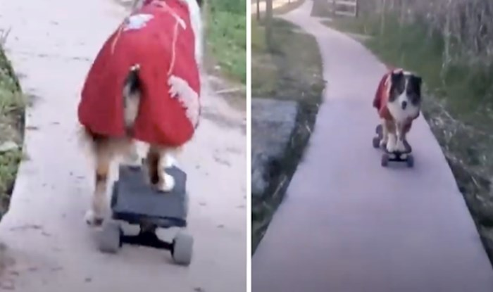 VIDEO Ovaj pas besprijekorno vozi skateboard po uskoj cesti vozi