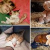 15 fotografija usporedbi koje govore puno više od riječi