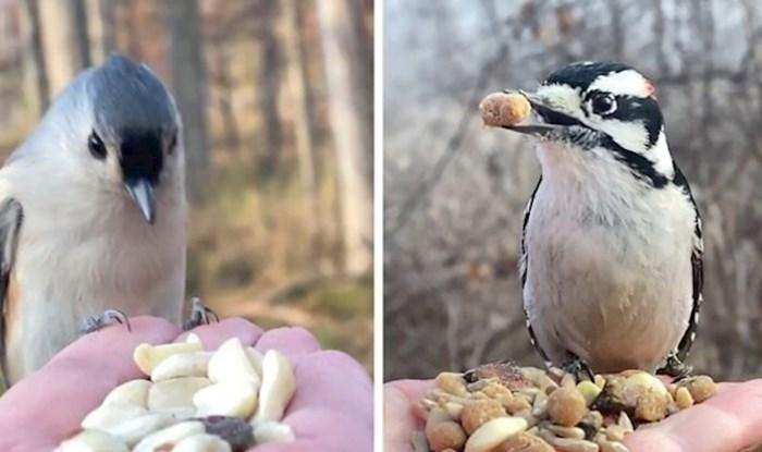 Ovoj fotografkinji ptice jedu iz dlana, a sve bilježi slow motion tehnikom