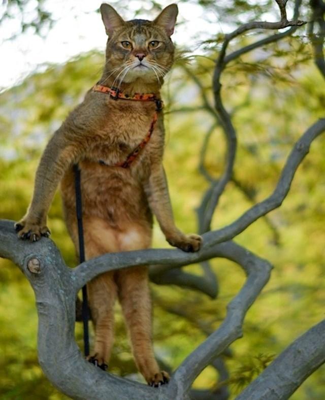 Mačke su prirodni modeli: to je činjenica koja ne treba nikakav dokaz..