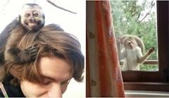 32 smiješna majmuna koji se ponašaju, pa poput majmuna 😄