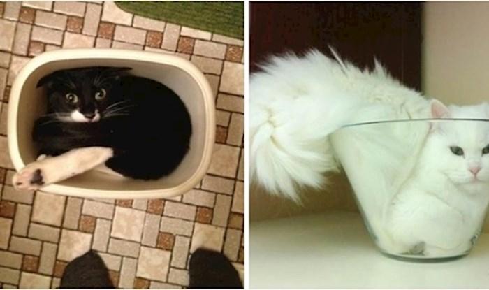 13 fotki koje su dokaz da su mačke stvarno čudne životinje 😅