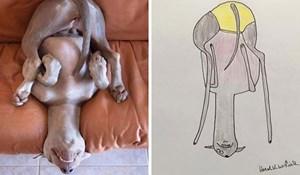 Smiješne fotke životinja postaju urnebesne kada ih ovaj umjetnik nacrta
