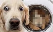 Pogledajte što je potpuno izbezumilo ovog jadnog psa