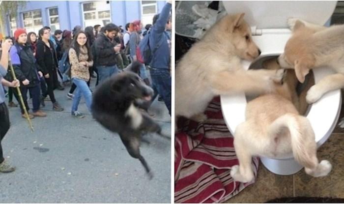 Urnebesne fotke pasa koje će svima izmamiti veliki osmijeh na lice