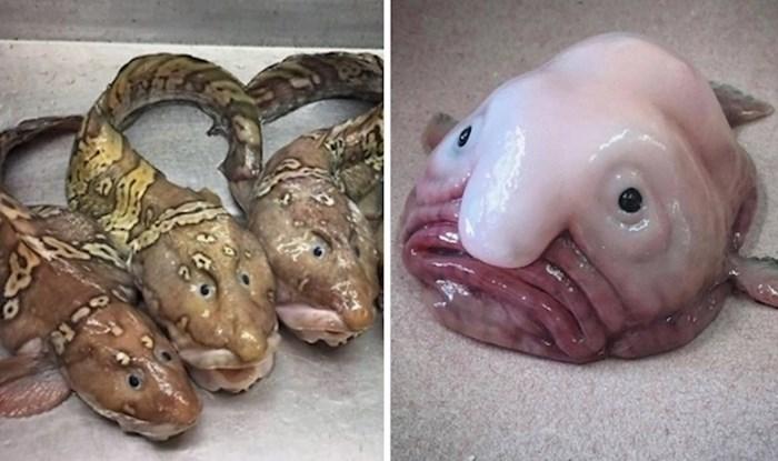 Ovaj Ruski ribar objavljuje zastrašujuća i nevjerojatna stvorenje iz dubokog oceana