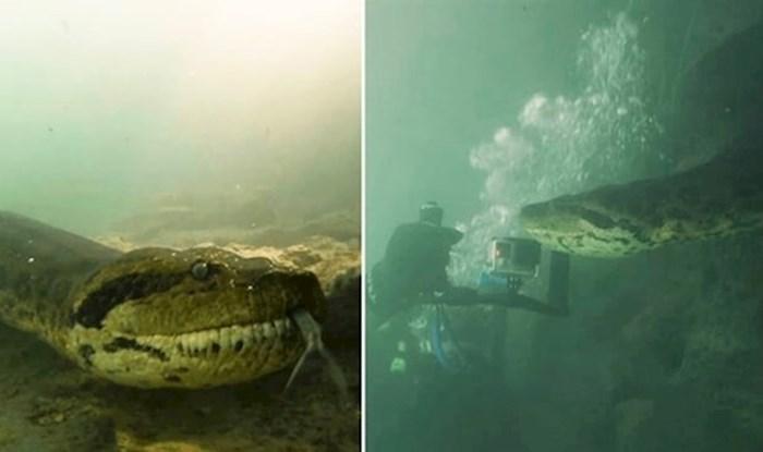 VIDEO Nevjerojatni susret ronioca i ogromne anakonde duge sedam metara