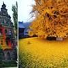 15 fotografija koje pokazuju kako čarolija jeseni izgleda diljem svijeta