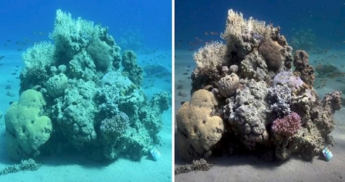 Znanstvenik je osmislio algoritam koji je rješio problem mutnih podvodnih fotografija