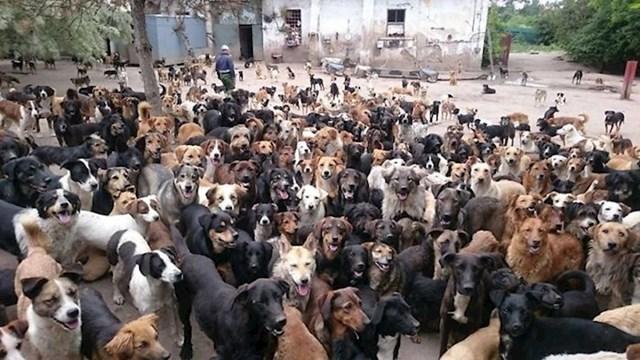 """Pod """"prenapučenošću"""" podrazumijevamo 750 pasa koji u ovom trenutku žive tamo"""