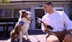 Ovaj pas tijekom intervjua napravio je ono što najbolje zna