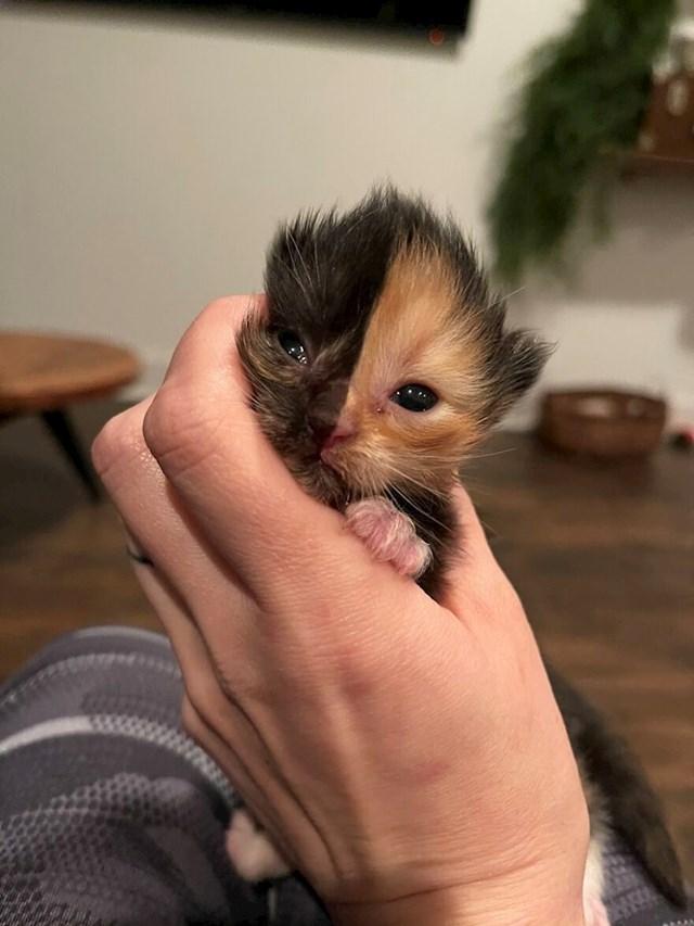 Upoznajte pricot jednog od dva napuštena mačića pronađena u zidu