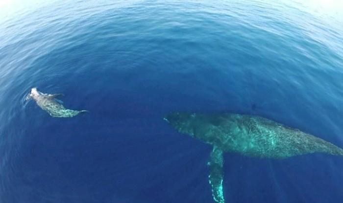 VIDEO Isplovio je do savršenog mjesta pa dronom snimio čarobnu scenu