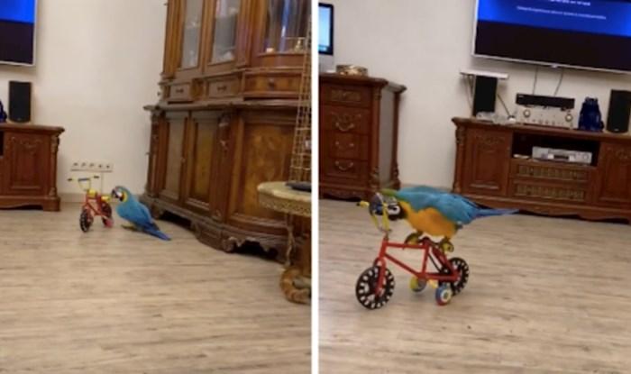 VIDEO Ova obitelj svojim ljubimcima kupuje igračke, Baron obožava bicikl