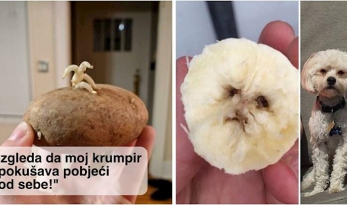 20+ neobično oblikovanog voća i povrća koje izgleda kao nešto drugo
