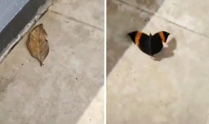 Netko je na Twitteru podijelio video neobičnog stvorenja kojim su mnogi ostali fascinirani