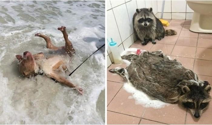 +25 fotki iz grupe posvećenoj životinjama u najčudnijim situacijama koje ljudi obožavaju
