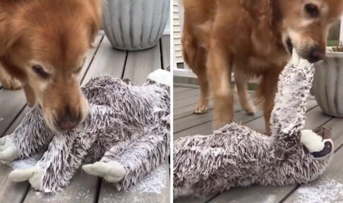 VIDEO Masonova najdraža igračka se smrzla i zalijepila za trijem kuće, pogledajte kako je izgledalo spašavanje