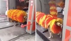 VIDEO Ovaj pas nikad ne propušta priliku kada je u pitanju autopraonica