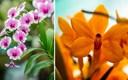 Ovaj umjetnik od djetinjstva fotografira orhideje, donosimo 20 prekrasnih primjera