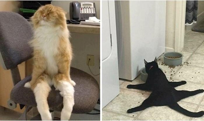 Ovaj Instagram profil prepun je fotki mačaka koje se čudno ponašaju