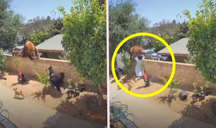Medvjedica s mladuncima prolazila je kroz dvorište, a vlasnica se odlučila na veoma opasnu radnju