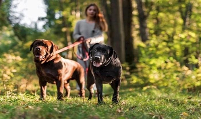 Vlasnike pasa odmah zaboli glava od ove fotografije